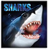 Sharks, Martin Kasso, 1581177976