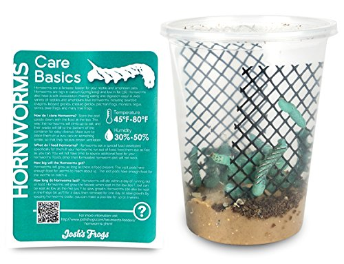 51kJOzN0rdL - Hornworms Habitat Cup (25 Count Cup)