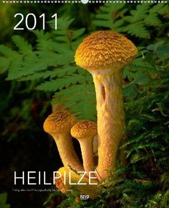 Heilpilze 2011, 40x49 cm