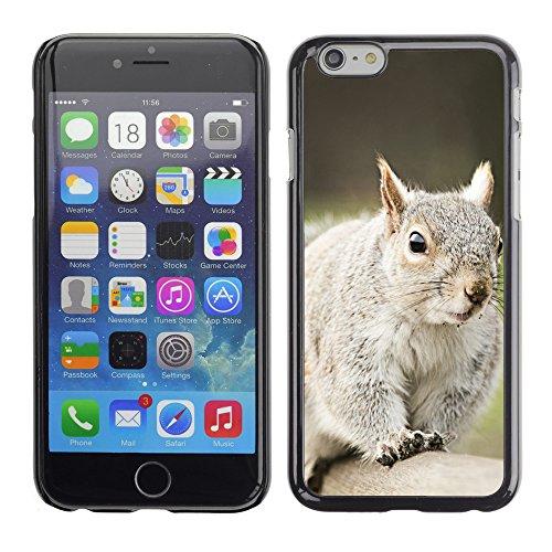 "Premio Sottile Slim Cassa Custodia Case Cover Shell // V00003873 écureuil 8 // Apple iPhone 6 6S 6G 4.7"""