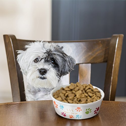 The 8 best dog dishes with lids