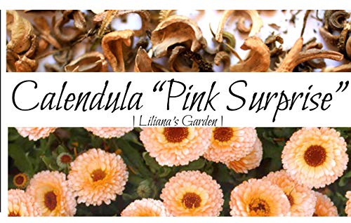 Calendula Seeds - Pink Surprise - Edible - English Marigold - Liliana's Garden ()