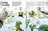 Trees, Leaves, Flowers and Seeds: A Visual