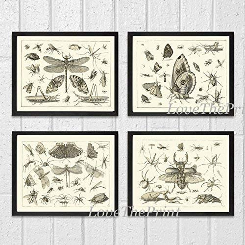Art Print SET of 4 Beautiful Antique Dragonfly Butterfly Beetle Moth Spider Spring Summer Garden Insects Natural Science Illustration Home Room Wall Interior Decor Unframed FLS (Framed Butterfly Print Garden)