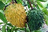 Fresh Rollinia Deliciosa - Biriba - Rare Tropical Plant Tree 5 Seeds