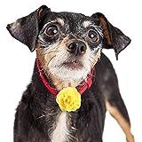 Leinuosen 20 Pieces Dog Collar Flowers Pet Bow