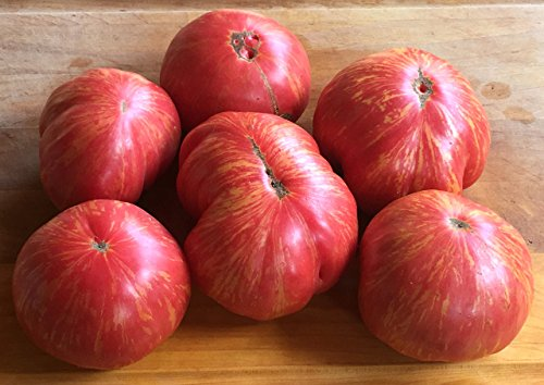 HEIRLOOM TOMATO SEEDS - PRO Bred Non-GMO 4 PACK: Red Sunset, Dino Egg, Pink Sunrise, & Brick - by Solstice Farm - Austin TX Top Selling Organic Specialty Tomato - Austin Solstice