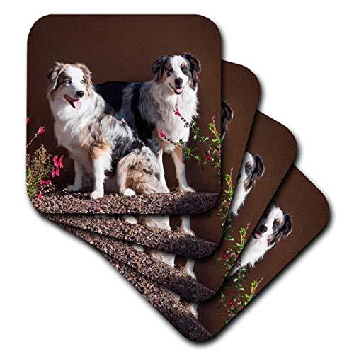 - 3dRose CST_88091_3 Australian Shepherd Dogs US03 ZMU0022 Zandria Muench Beraldo Ceramic Tile Coasters (Set of 4)