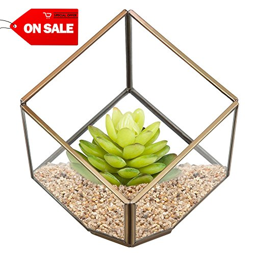 HOMEIDEAS Modern Terrarium Clear Glass Pyramid Tabletop Geometric Polyhedron Box,Decorative Succulent Plants Holder(Brass) (Terrarium Brass)