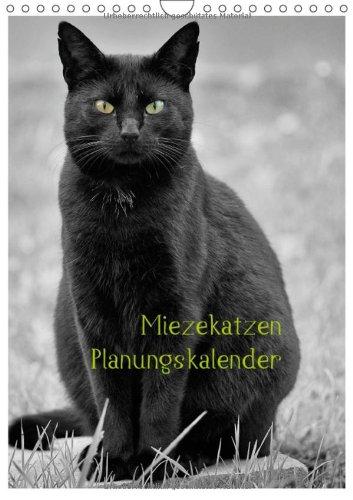 Miezekatzen Planungskalender (Wandkalender 2014 DIN A4 hoch): liebenwerte Hauskatzen als Fotomodels (Monatskalender, 14 Seiten)