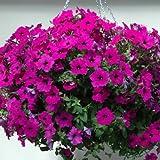 Petunia Easy Wave Violet Pelleted Flower Seed 100 Seeds
