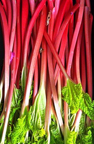 Rhubarb Victoria Seeds up to 2LB Rare Heirloom Pie Fruit Jam Bulk #208 (1 LB, or 26,000 - Hours For Victoria Gardens