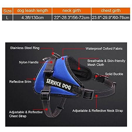 Petacc - Arnés ajustable para correa de perro, arnés y correa para mascotas con correa de perro, diseño reflectante, apto para perros de tamaño mediano, ...