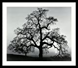 Framed Art Print, 'Oak Tree, Sunset City, California, 1962' by Ansel Adams: Outer Size 27 x 23''