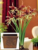 Amaryllis Lima Trio in a Wooden Acanthus Leaf Square