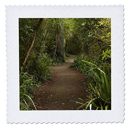 3dRose Danita Delimont - New Zealand - Forest Path, Thompsons Bush, Invercargill, South Island, New Zealand - 12x12 inch quilt square (qs_312950_4) (Best Hiking Trails In New Zealand South Island)