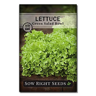 Sow Right Seeds - Green Salad Bowl Lettuce Seed for Planting - Non-GMO Heirloom Packet with Instructions to Plant a Home Vegetable Garden, Indoors or Outdoor; Great Gardening Gift (1) : Garden & Outdoor