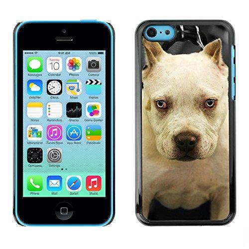 Premio Sottile Slim Cassa Custodia Case Cover Shell // F00014404 chien // Apple iPhone 5C
