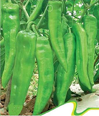 SD0151 Green Hot Pepper Vegetable Seeds, Spice Chilli Pepper Vegetable Seeds (30 Seeds)