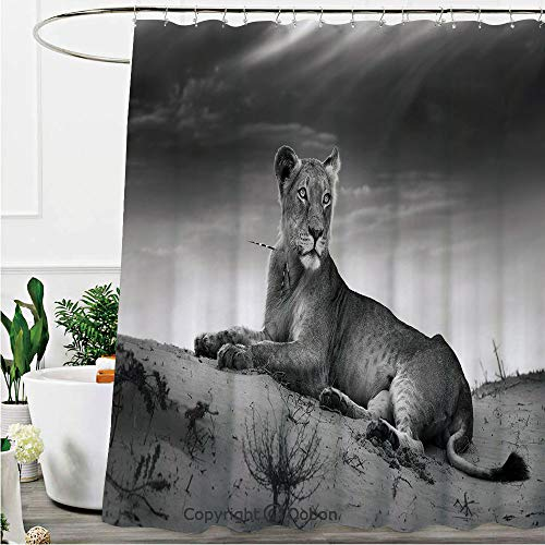 (Oobon Shower Curtains, Wild Lioness on Desert Dune African Animal Safari Image, Fabric Bathroom Decor Set with Hooks, 72 x 72 Inches)