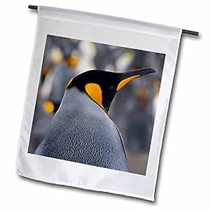 Danita Delimont - Penguins - King Penguin, Salisbury Plain, South Georgia, Antarctica-AN01 KSU0077 - Keren Su - 18 x 27 inch Garden Flag (fl_74320_2)