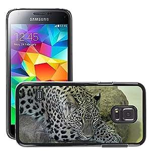 GoGoMobile Slim Protector Hard Shell Cover Case // M00119153 Leopard Animal Large Carnivores Cat // Samsung Galaxy S5 MINI SM-G800