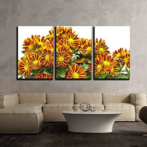 3 Piece Canvas Wall Art - Chrysanthemum Morifolium -