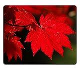 MSD Mousepad Acer Japonicum Vitofolium Natural Rubber Material Image 4022286493