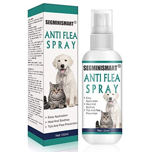 🥇 Productos para mascotas con cuanto olores