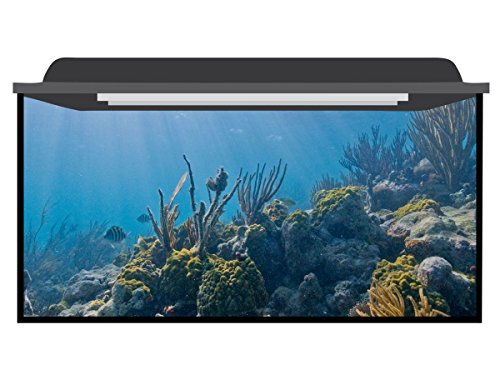 Deep Blue Themes Reef Sun Aquarium Background (121-210 Gallons (80Wx30H)) by Deep Blue Themes