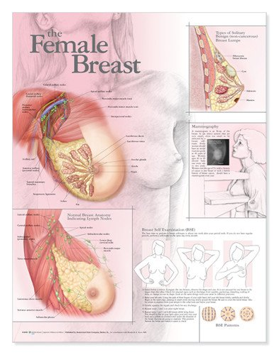 Female Breast Anatomy Anatomical Chart Lippincott Williams and Wilkins 781782163 ANF: Health and Wellbeing Education & Training GYNECOLOGY General Adult Gynaecology & obstetrics Gynecology & Obstetrics MEDICAL MEDICAL / Anatomy MEDICAL / Nursing / Maternit