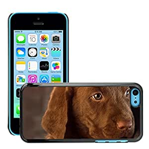 Hot Style Cell Phone PC Hard Case Cover // M00046207 pets animals cute labrador puppy // Apple iPhone 5C