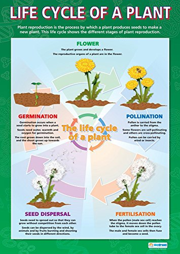 Life Cycle of a Plant | Science Posters | Gloss Paper Measuring 33