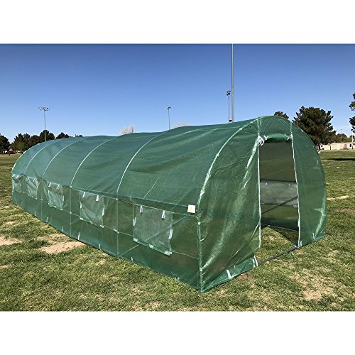 Palm Springs 26 x 10 x 7ft Polytunnel Walk in Greenhouse-Strong Anti-Rust Frame