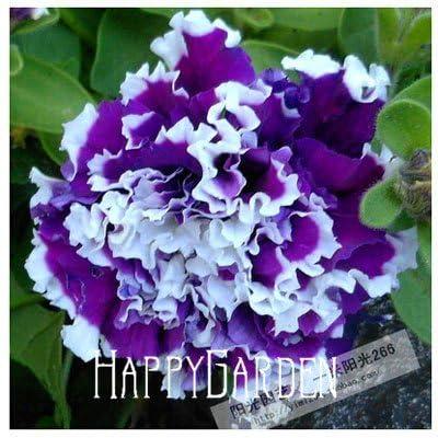 Flower seeds Petunia Super Cascade Mixed 100 PELLETS (HANGING BASKETS)garden helper, #93B7N0 : Garden & Outdoor