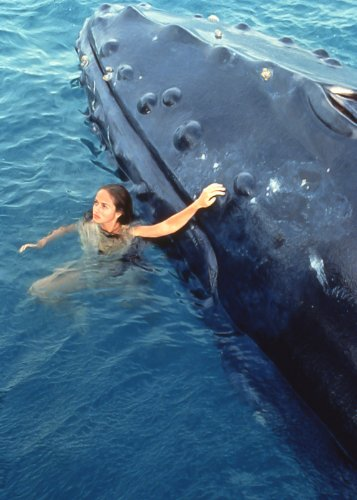 Malvorlagen Plötzlich Meerjungfrau My Blog