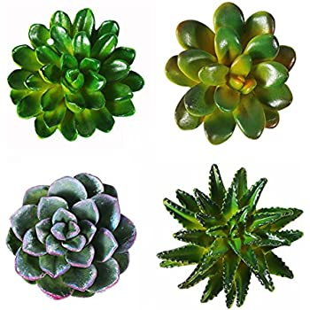 CoCoMe Funny 3D Resin Succulent Fridge Refrigerator Magnets Good Gift for Kid Friends