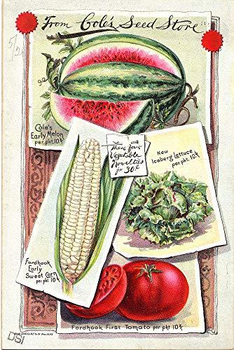 (WholesaleSarong Watermelon Corn Lettuce Tomatoes Cole's Garden 1893 Retro Poster Interior Decorating Wall Art Prints)