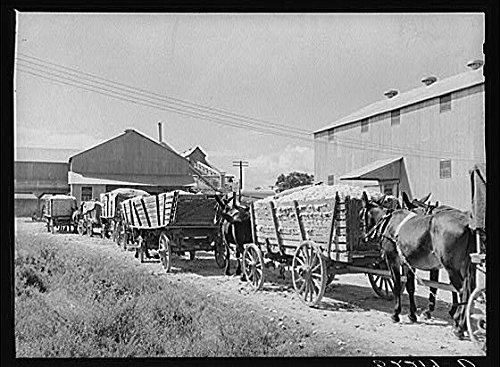 HistoricalFindings Photo: Delta & Pine Land Company of Mississippi,MS,Farm Security Administration,FSA,3 (Delta & Pine Land Company Of Mississippi)