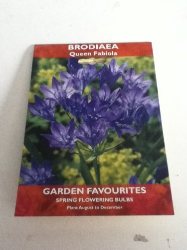 Brodiaea - Queen Fabiola- Spring flowering bulbs
