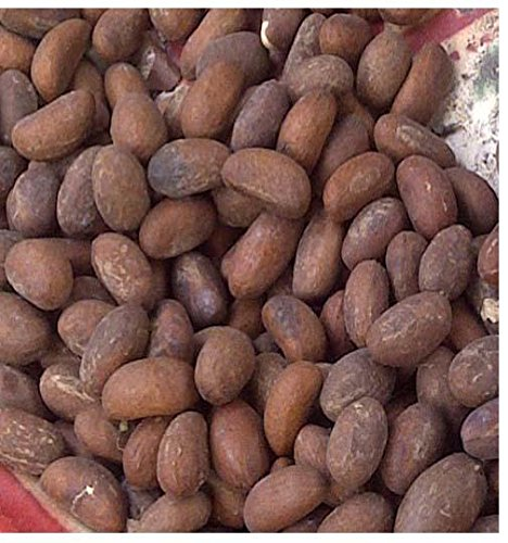 Cola Nut - 2