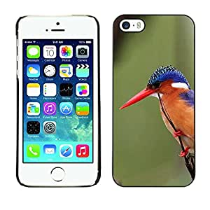 SKCASE Center / Funda Carcasa - Pico plumas verde;;;;;;;; - iPhone 5 / 5S