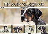 Der Louisiana Catahoula Leopard Dog (Wandkalender 2020 DIN A4 quer): Hunderasse aus den USA (Monatskalender, 14 Seiten )
