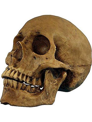 Skull Resin Cranium