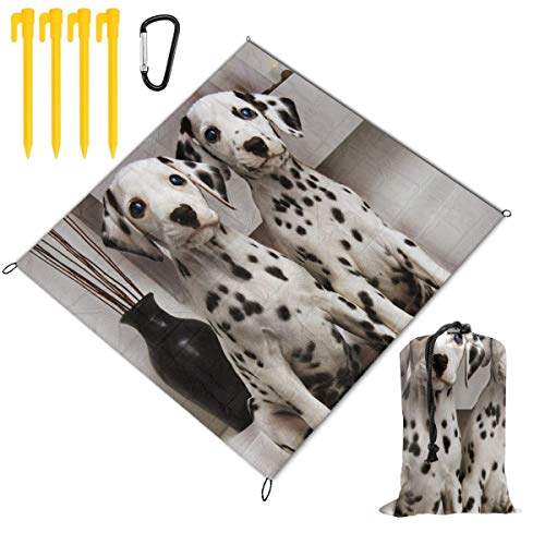 - Two Lovely Dalmatian Dogs Picnic Blanket Mat, Waterproof Foldable Play Mats for Kids, Babies, Families - Protective Beach Blankets for Park, Camping, Yard, Lawn, Sand 59 x 57 inch