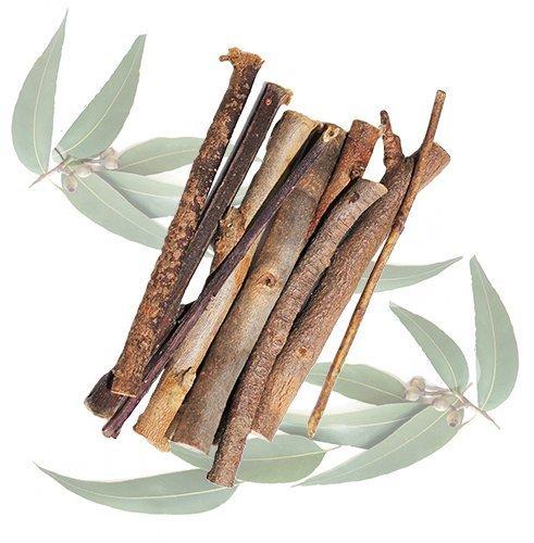 - Exotic Nutrition Eucalyptus Branches 2.29 oz. - Sugar Glider Treat