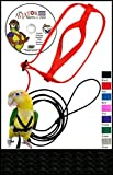The AVIATOR Pet Bird Harness and Leash: Mini Black