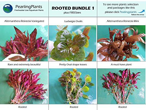 Rooted Bundle 1 Plus Freebies, Live Aquarium Plants by PearlingPlants, Freshwater, Live Aquarium Plants (Image #1)