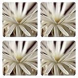 Liili Square Coasters Image ID 23252581 Flowering cactus Echinopsis Setiechinopsis mirabilis macro shot