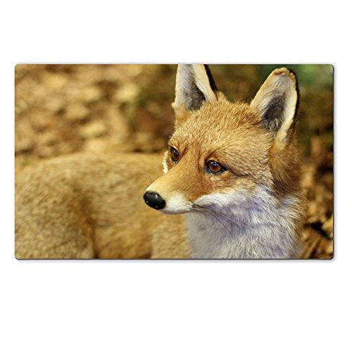 Luxlady Large TableMat IMAGE ID 21433299 young specimen of Fox while resting lying in the middle of the leaves in autumn 2 (Embalming Table compare prices)